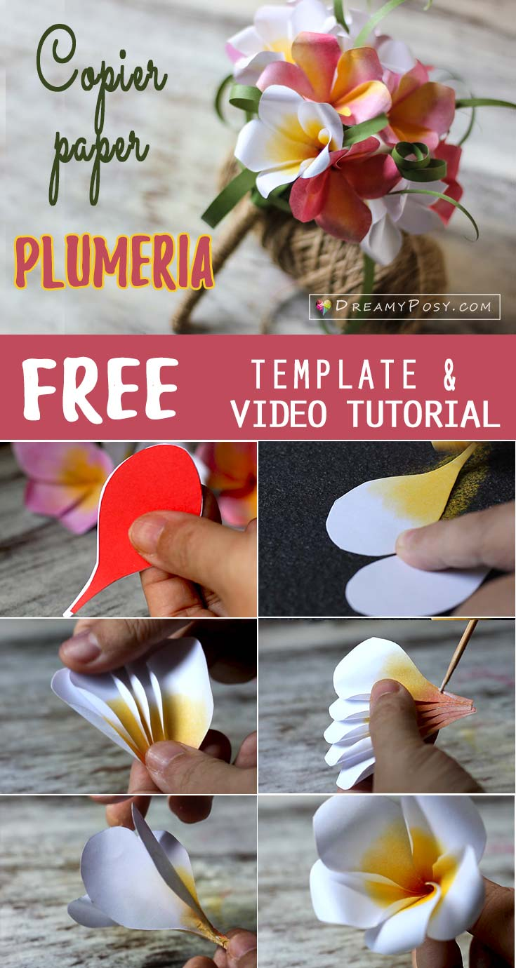Plumeria paper flower, free template and tutorial