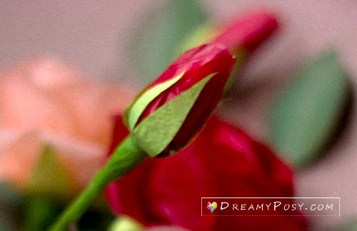 paper rose bud tutorial, #paperflower, #paperrose #tissuerose #rosetutorial