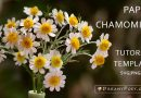 Paper Chamomile tutorial and template